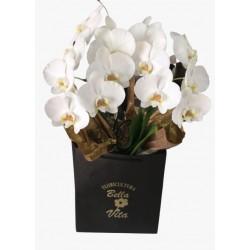 Orquídea Phalaenopsis Branca com 2 Hastes